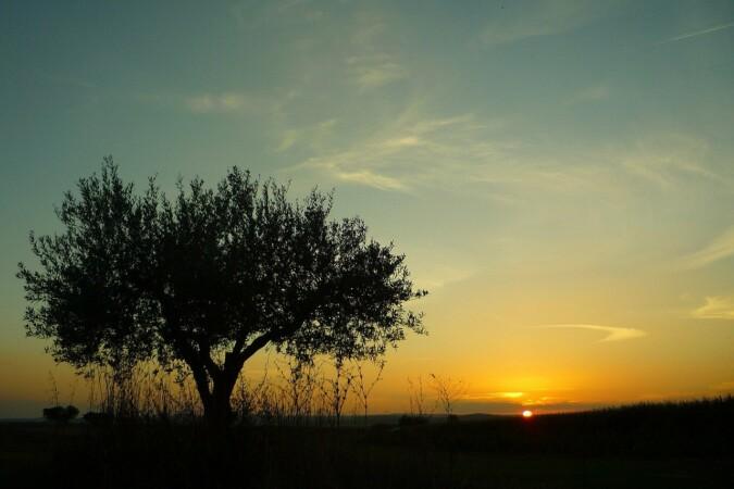 "Alentejo region ""equestrian property in Portugal"""