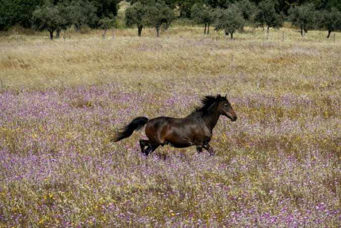 "Horse in ""Equestrian Property in Portugal"""